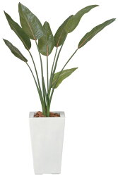 光触媒光の楽園ストレチア【グリーン:フロアタイプ観葉植物】