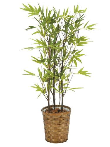光触媒 観葉植物 光の楽園黒竹 高さ75cm