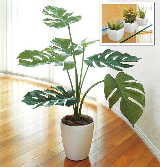 光触媒 光の楽園 モンステラ75cm&多肉植物セット