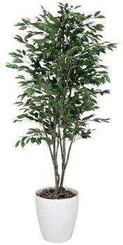 光触媒観葉植物光の楽園ベンジャミンツリー高さ1.6m