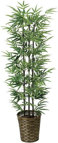 光触媒 光の楽園 黒竹 高さ1.35m 幹:天然竹