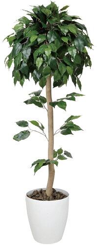 ベンジャミントピアリー 高さ1.5m