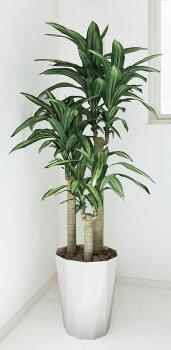 【送料無料】光触媒観葉植物光の楽園幸福の木高さ1.6m【ドラセナ人工観葉植物大型】