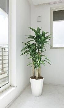光触媒光の楽園幸福の木(ドラセナ)H1.6m【グリーンフロアタイプ人工観葉植物】