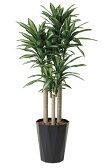 【送料無料】光触媒 観葉植物光の楽園 幸福の木 1.8m【ドラセナ 人工観葉植物 大型】