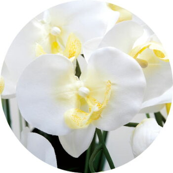 光触媒光の楽園ロイヤル胡蝶蘭5本立W【アートフラワー造花】【_のし宛書】