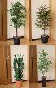 人気の光触媒 人工観葉植物(大型)を数量限定で特価販売♪光触媒の造花と人工観葉植物の専門店...