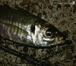 ヤマガブランクス(YAMAGABlanks)ブルーカレント2BlueCurrent74II(BlueCurrent742)アジングロッドアジメバルチヌセイゴシーバス海釣り磯釣り釣竿スピニングロッド釣具【あす楽対応】【RCP