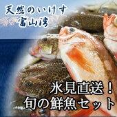 【送料無料】氷見漁港水揚げ旬の鮮魚セット4000円