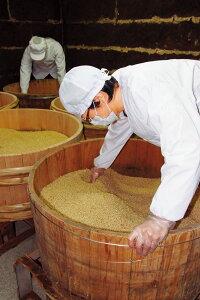 麦麹の半切桶仕込み