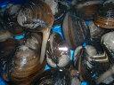 ■殻が厚く、重くて大きな二枚貝のホッキはウバイガイとも呼ばれます。活ホッキ貝(天然)300g...