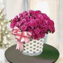 ベルギーアザレア 冬の鉢花ギフト 当店一番人気!【ウィンター...