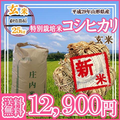 【29年産新米予約受付開始】【送料無料】山形県産 特別栽培米コシヒカリ 玄米 25キロ★どぉ~んと大特価!げんまい 25kg お米(おこめ)【安全で確かなものを食卓へ】