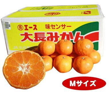 【エースM】【送料無料】糖度12度以上保証甘さまろやか広島みかんといえばの大長みかん「大長エース」Mサイズ5kg入