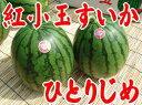 フルーツひろは(送料無料)山形産小玉西瓜ひとりじめX2玉
