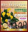 【母の日 ギフト】カラー「キャプテン モレリー」 5号鉢 イエロー オリジナルバスケット付き♪数量限定生産!花 鉢植え 鉢花