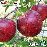 青森りんご 大紅栄 訳あり 5kg前後 10〜16個入【送料無料】つがりあんアップル 訳ありりんご 5kg 通販 青森 購入 産地直送 弘果