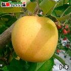 青森県産りんご「トキ」家庭消費用14〜18個入☆