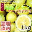 【産地直送】広島 大長産 レモン 1kg 冷蔵配送【広島産レモン】【国産レモン】【なかだい農園】