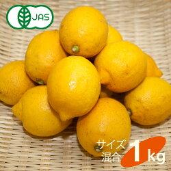 送料無料有機JAS認定無農薬広島県大長産レモン1kgサイズふぞろい農園直送大崎下島下田農園国産皮まで食べられますオーガニック有機栽培