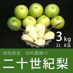 【産地直送】鳥取産二十世紀梨3kg(2Lサイズ8玉)【田村農園】
