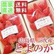 【産地直送】【送料無料】広島県三次産いちご とよのか1箱4パック入り(1パック10〜14粒、約270g×4P)香り豊かで甘いイチゴ【小さなくだもの畑】