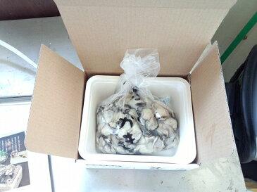 送料無料 産地直送 広島県産 生牡蠣 むき身 2kg アミスイ かき小町 かき カキ 牡蛎 かき鍋 カキフライ