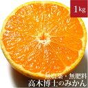 高木博士のみかん 1kg 自然栽培(無農薬・無肥料 ) 愛媛県産