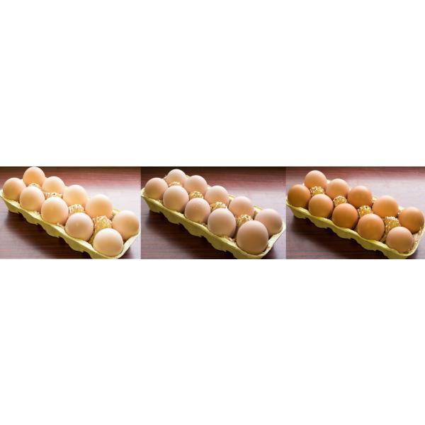 3種の地鶏の平飼い有精卵詰め合せ【岡崎おうはん...の紹介画像2