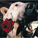 Flower Companyz フラワー カンパニーズ / フラカンのフェイクでいこう+恋をしましょう+7 【CD】