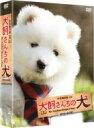 【送料無料】連続テレビドラマ 犬飼さんちの犬 DVD-BOX 【DVD】