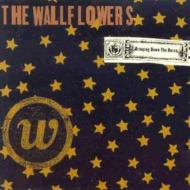 Wallflowers / Bringing Down The House 輸入盤 【CD】