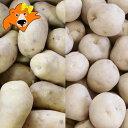 北海道 じゃがいも 男爵いも 10kg 送料無料 メークイン 10kg(合計20kg) 価格5720円 北海道産 ジャガイモ だんしゃくいも