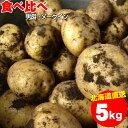 今季出荷中!越冬じゃが じゃがいも 送料無料 北海道産 食べ比べセット 5kg(男爵3kg・メークイン2kg/計5kg)【5kg 5kg 5キロ 男爵 い..
