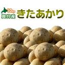 [2020年秋収穫 キタアカリ10kg] 新じゃがいも 北海道真狩産「きたあかり」北あかり ジャガイモ