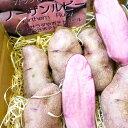 【再入荷】過剰在庫訳ありノーザンルビーじゃがいも10kg北海道剣淵町産