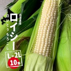 【農家直送】北海道産白とうもろこしロイシーコーン11本(L〜2L)