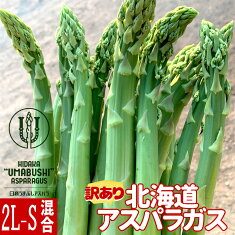 緊急SALE!【農園直送】訳ありうまぶしアスパラ北海道日高産<2L-Sサイズ混合>1kg