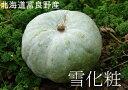 【訳あり】富良野産 白いカボチャ「雪化粧」10kg(4〜6玉)※送料無料【九州・沖縄を除く※発送は12月上旬となりますかぼちゃ 北海道 南瓜 かぼちゃ ゆきげしょう パンプキン かぼちゃ ハロウィン カボチャ 白 かぼちゃ 10kg 送料無料