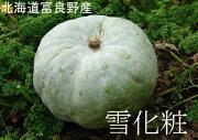 カボチャ かぼちゃ パンプキン ハロウィン