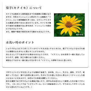 (送料無料)北海道赤井川村産【菊芋】1kg医食同源きくいもキクイモ菊いも菊イモイヌリンインシュリン医食同源