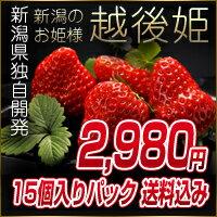 いちご 新潟産 2L〜3Lサイズ イチゴ 苺 15個化粧箱入り 460〜500g 越後姫(えち…