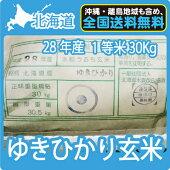 【新米】北海道産ゆきひかり玄米(30Kg)【送料無料】【一等米】【北海道米】【平成28年産】