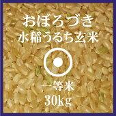 おぼろづき玄米30kg送料無料北海道米29年産1等米低アミロース米