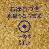 おぼろづき玄米30kg北