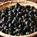 網走湖産のシジミ