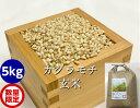 もち米・玄米5kg(カグラもち)[餅米・モチ等販売]