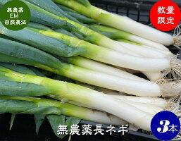 有機栽培人参(にんじん)