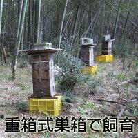 国産はちみつニホンミツバチ(日本蜜蜂)のはちみつ1kg(2014年新蜜)【古式養蜂の蜜】【蜂蜜国産】【RCP】