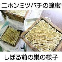 国産はちみつニホンミツバチ(日本蜜蜂)のはちみつ1kg(2015年新蜜)【古式養蜂の蜜】【蜂蜜国産】【RCP】
